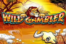slot-machine Игровой автомат Wild gambler без регистрации – добро пожаловать в Африку!